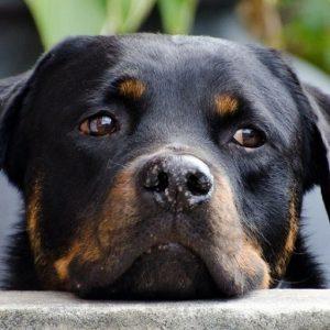 cropped-dog-218965_1280.jpg